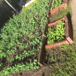 家庭菜園緑化計画