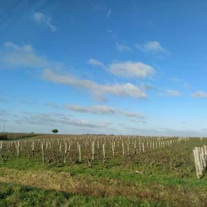 ワイン畑通過しました@AOC アンジュー・ソミュール
