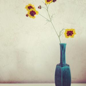 野花をいける ハルシャギク