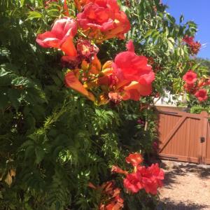 お庭に水遣りも気を使います- ロワール地方水規制