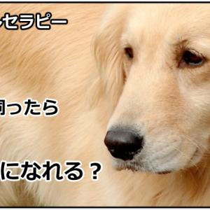犬を飼うと幸せになれる!?(アニマルセラピーの効果)