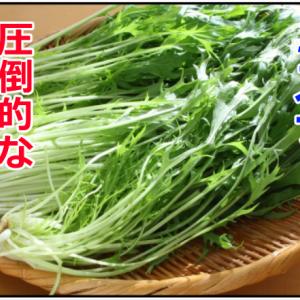実はミズナは超優秀な野菜!?【美肌食品】スキンケア成分満載!