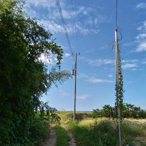 「第1発電所の現地確認」20190928