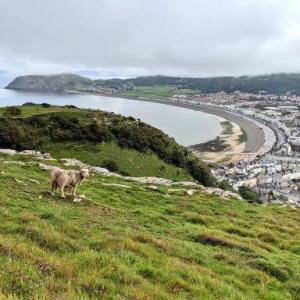 北ウェールズ観光・スランディッドノ 本物のアリスが休暇を過ごした街