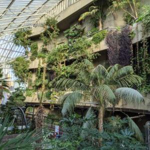 バービカン・コンサーバトリー 大都会ロンドンの中心にある無料の温室