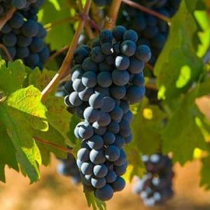 最高の出会い「ロッカ・モラ」!この価格帯の赤ワインで最高!!