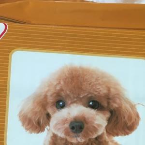 コストコ最安伝説の終焉~アイリスの薄型ペットシーツは直販サイトがお得!
