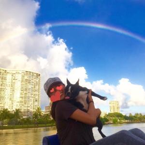 ハワイでは犬が売ってない❔~米国でのペット販売に対する感覚💡✎~