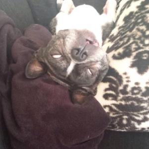 あなたの愛犬は熟睡していますか❔~白目から分かる熟睡度♬~