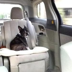 愛犬と一緒に電車に乗るには🚃❔~その準備や注意点♬~