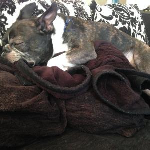 犬が寝てくれない🐶❔💦~「もっと眠らせて。。」飼い主を守るための対策♬~