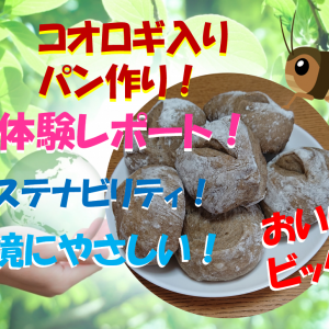 Pascoのコオロギ食育パンキットで夏休みの自由研究!パン作り体験レポート!