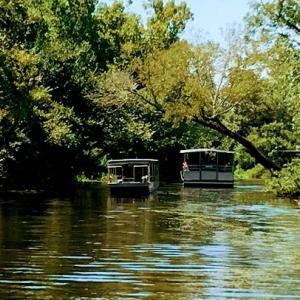 【沼地(スワンプ)ツアー】ルイジアナで赤ちゃんワニを抱っこできる沼地ツアーに参加してきた
