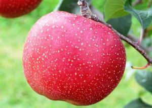青森のりんごで中国で無許可販売されている品種は何?特徴と味は?