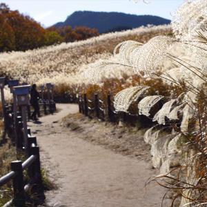 シーズン真っ盛りの曽爾高原~香落渓に行って伊賀でハンバーガーを食べる210km