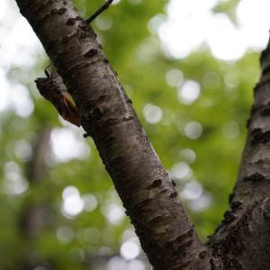 8月1日(木)のトレード