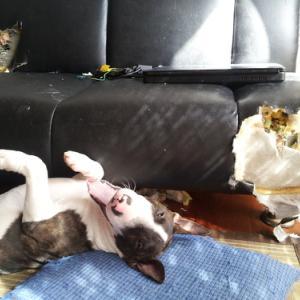 """"""" 我が家の犬猫 """""""
