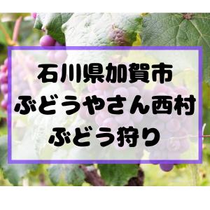 石川県加賀市「ぶどうやさん西村」でぶどう狩り