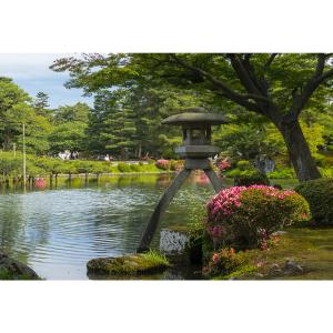 【金沢観光2019】兼六園でお花見【無料開放・ライトアップ】