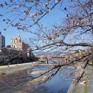 桜を愛でに。鴨川から木屋町通へ