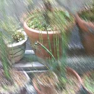 立派なオニヤンマさんと増殖中のジャンボトクサ