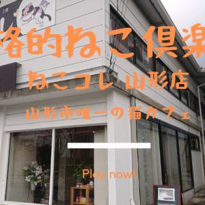 [山形市]ねこコレ|山形市内で唯一のねこ倶楽( 猫カフェ )