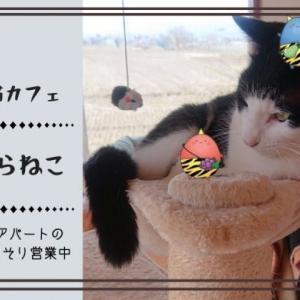 [高畠町]まほらねこ|置賜地方で唯一の保護猫カフェ