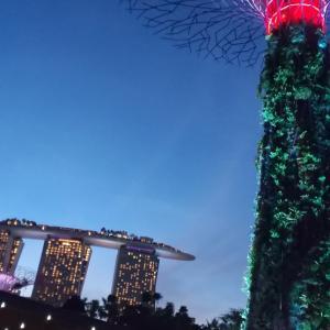 スーパーツリーグローブ ~シンガポールで一番インスタ映えするスポット