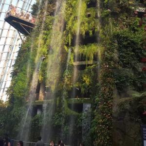 クラウド・フォレスト ~自然あふれる空中庭園~