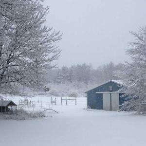 今朝の写真、雪。