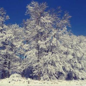 雪、一晩明けて。