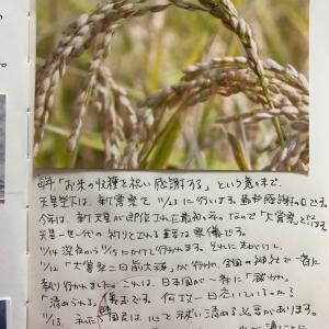 豊作に感謝、大嘗祭の前に… 【千年ノート感謝日誌】