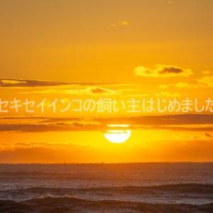 新年のごあいさつ(遅)