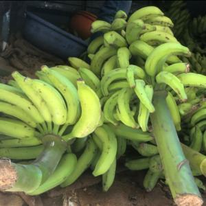今日はバナナを入手~