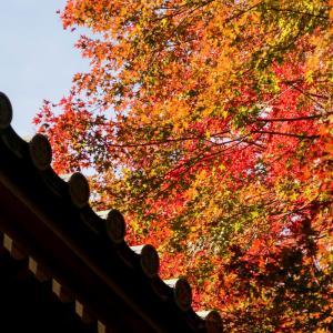 秋の日帰り高尾山その3【薬王院から山頂へ】