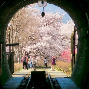 JR中央本線 勝沼ぶどう郷駅~桜並木と鉄道遺構のある駅~/訪問記&画像