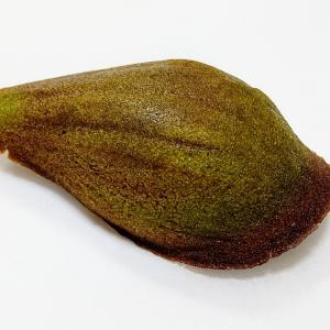 京都 牟尼庵 加加阿菓子カカオレーヌ抹茶とブラック
