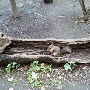 癒される井の頭自然文化園⑥