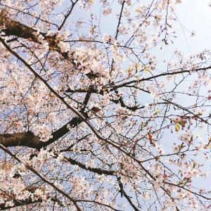 今の野党のパンケーキと桜を見る会への姿勢に店や組織を運営するヒントがある