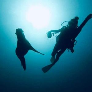 めっちゃ頭使ったから、もう今すぐ海に潜ってアシカと『ぴょーん』ってしたい