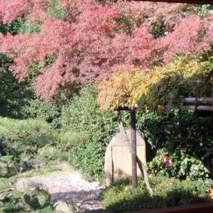 素晴らしい景色! 旧伏見奉行所庭園 中