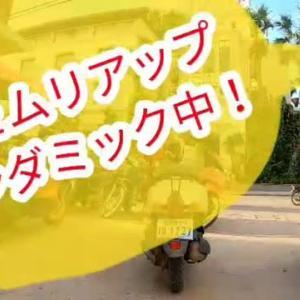 シェムリアップ、パンダミック中!