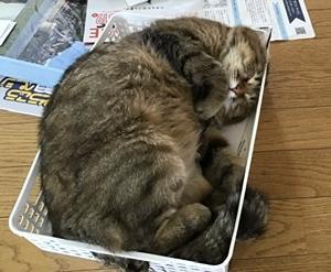 占い師の猫になれるための条件?その2