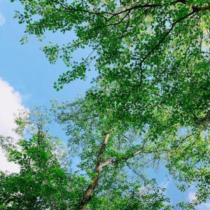 穏やかな日をイメージした、アロマで。