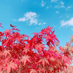 秋の深まりを感じて、秋の味覚を味わう。