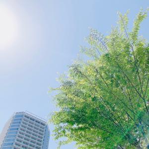 お天気の良い日には。