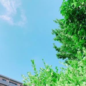 蒸し暑い日には。