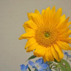 花と緑のある暮らし|ひまわり(Sunflower)