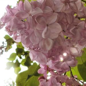 2020.5.12 初夏の花