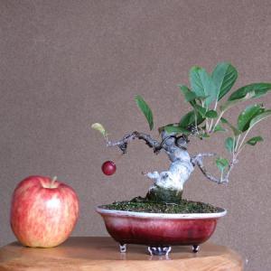 バラ科 リンゴ属